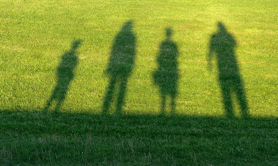 family law grass and shadows